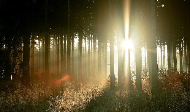 luz bosque